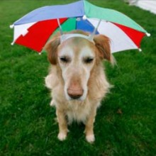 Pet Harmonizer is like an umbrella for your dog to protect it from EMF and External Negative effects.