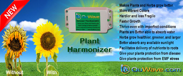 QuWave Plant Harmonizer rejuvinates your plants and flowers